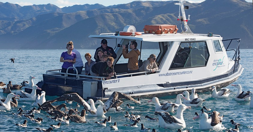 Meet seals and other local sea-life on the Hassle-free Kaikoura Tour.