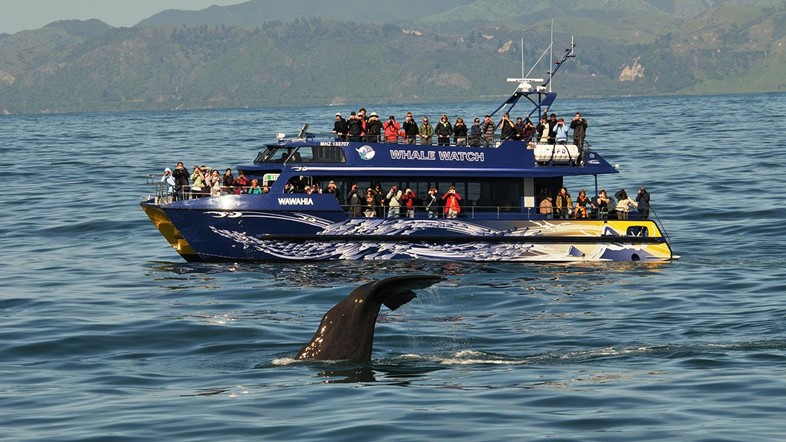 Whale-watching in one of the most beautiful places on earth.