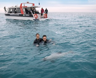 Swimming with Dolphins (Black Cat Cruises)