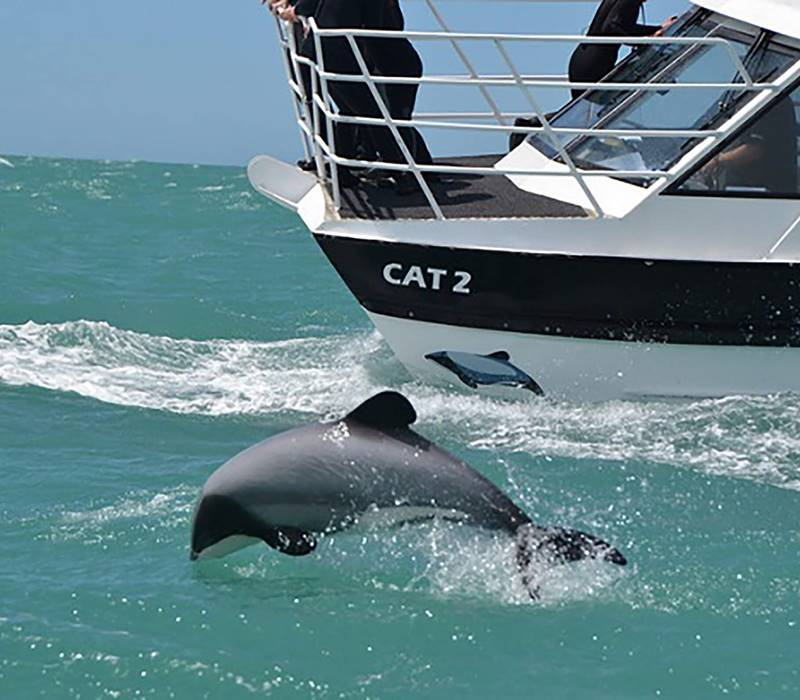 Black Cat Akaroa Dolphin Boat Water