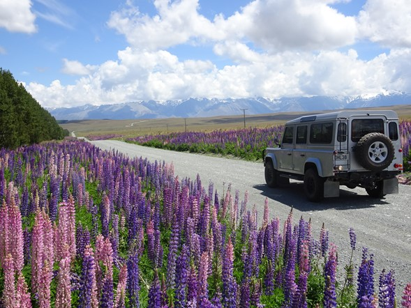 Lupine Crossing