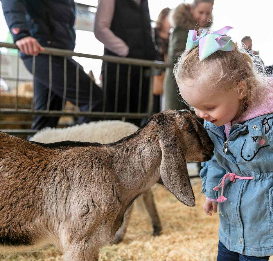 NZ Agricultural Show 2019 Kid Patting Animal