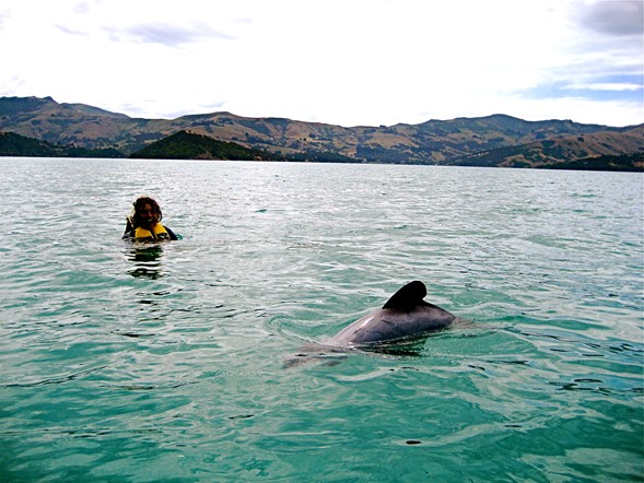 take the chance to spot a dolphin
