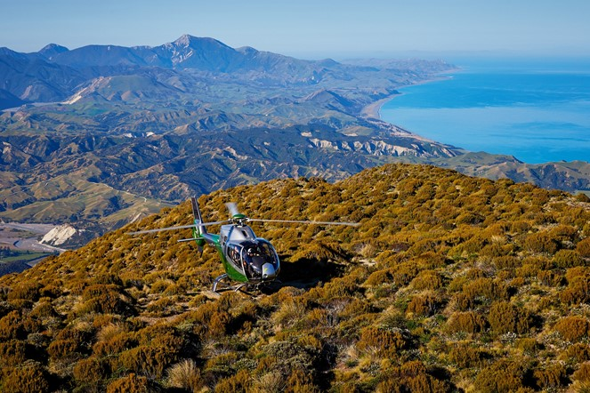 Our Premier Tour - showcases the best of Kaikoura by air, land, sea.