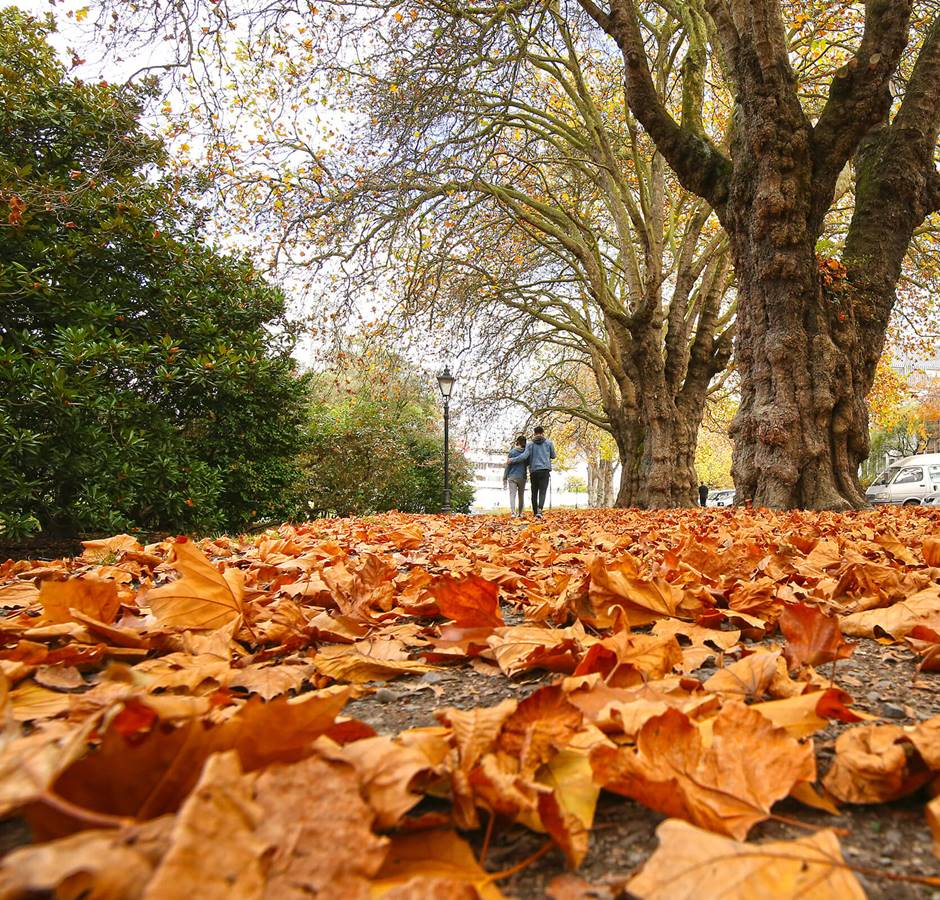 Christchurch Autumn Leaves