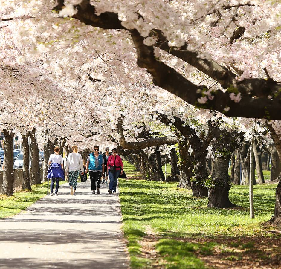Walkers in Spring at Hagley Park Christchurch